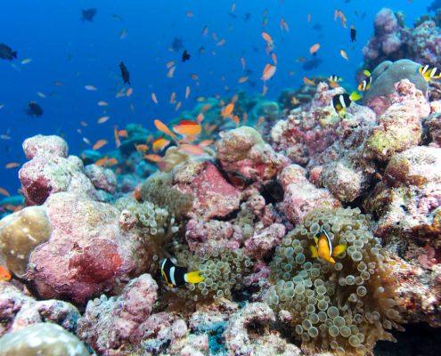 Hideaway Maldives Resort Diving