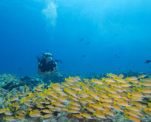 Maldives Resorts - Diving - Meridis - Hideaway Maldives