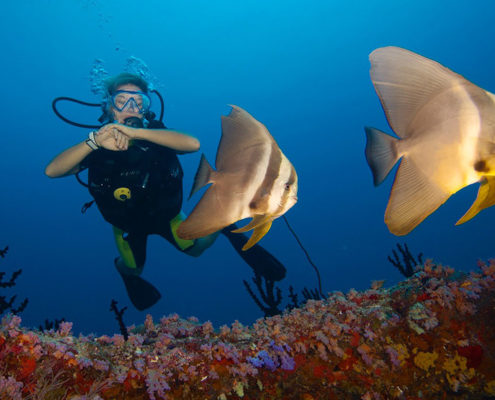 Maldives Resorts - Activities - Diving