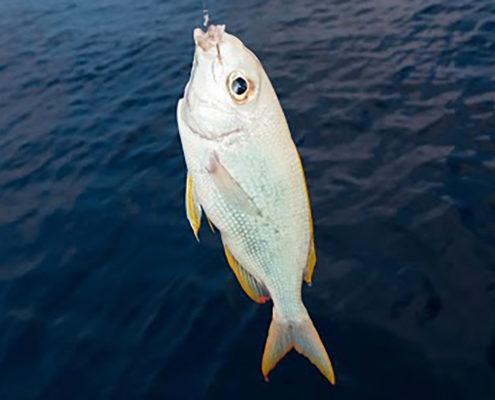 Hideaway Maldives Sunrise Handline Fishing