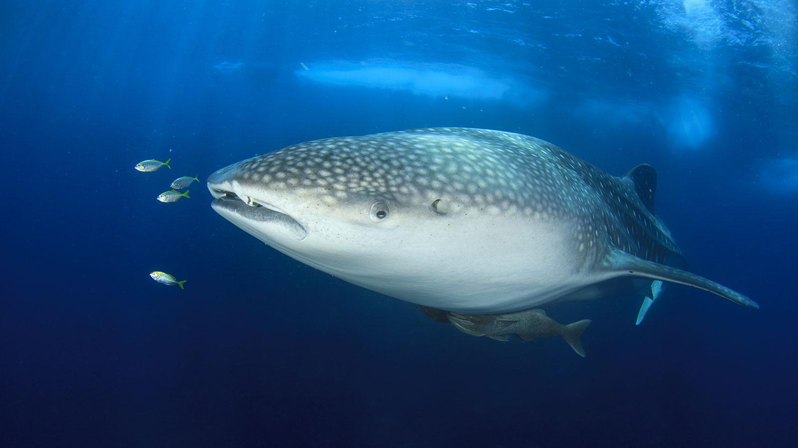 Maldives Resorts - Unforgettable dive experience in Haa Alifu - Hideaway Maldives Beach Resort & Spa